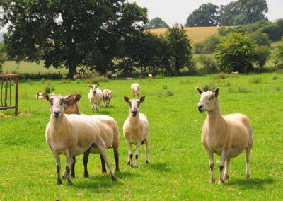 working-farm-bed-breakfast-cardington-shropshire-uk